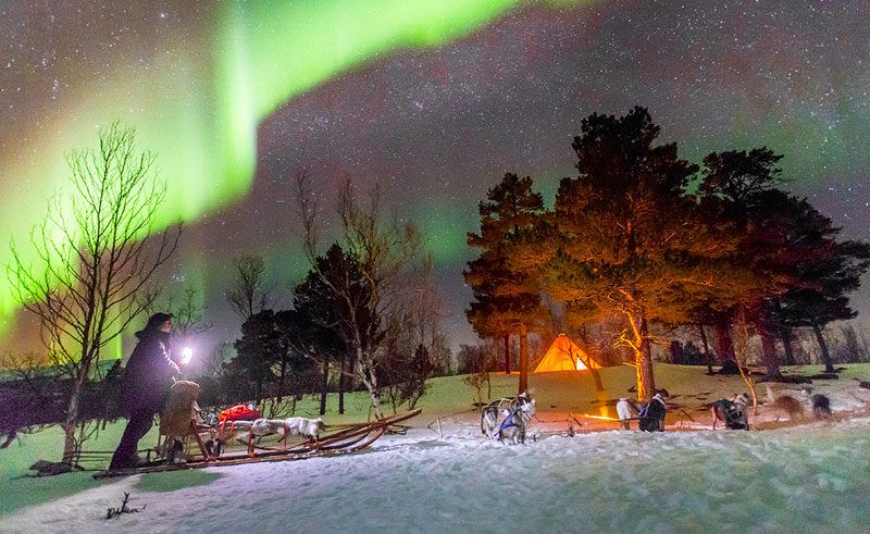 swedish lapland abisko husky sledding and aurora lm