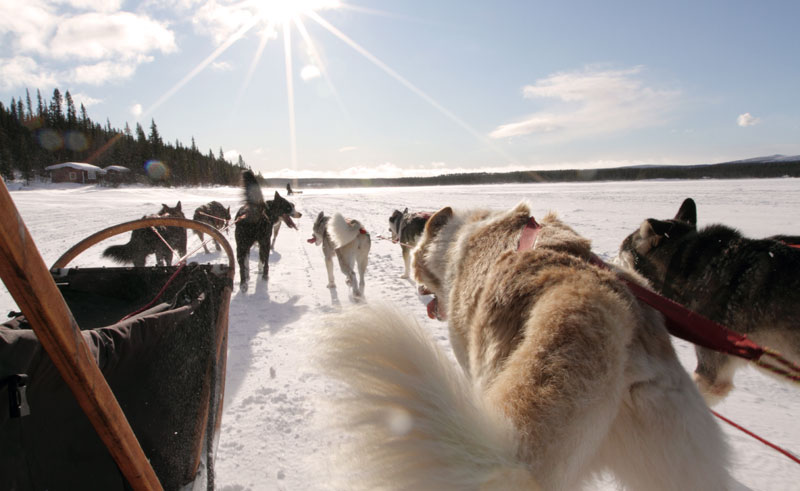 swedish lapland husky mushing wg