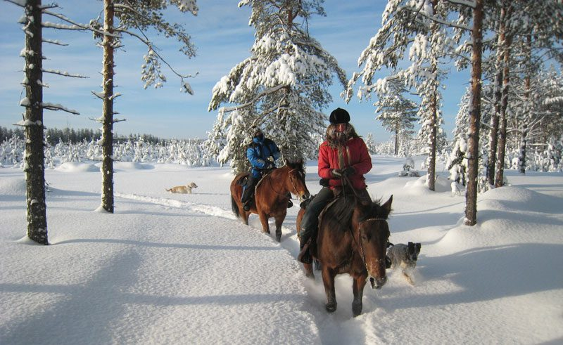 swedish lapland lannavaara horse riding aml