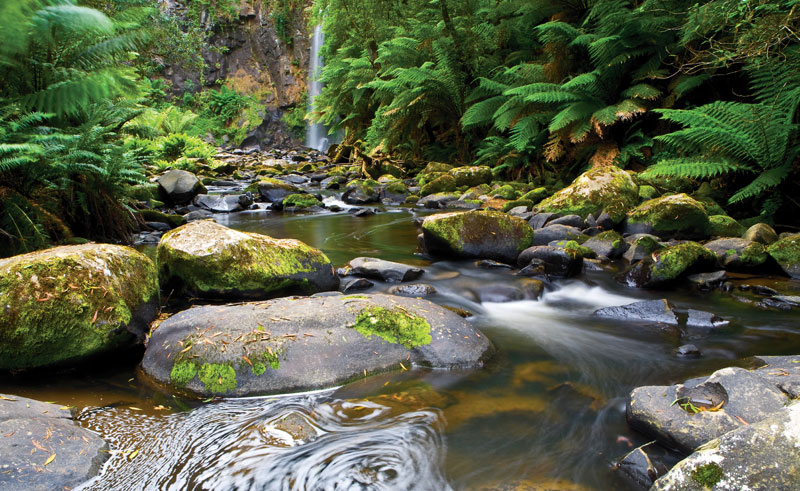 australia victoria great otway national park is