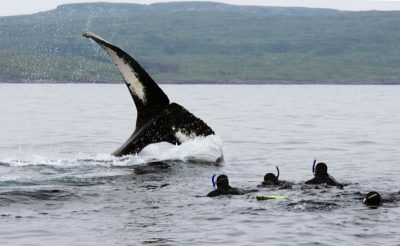canada newfoundland whale tail snorkelling