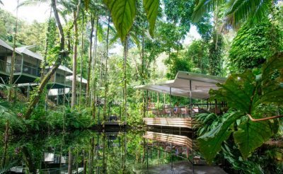 daintree eco lodge cabins overlooking rainforest