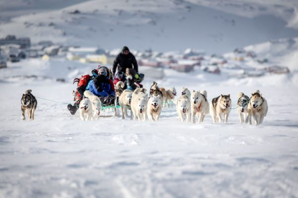east greenland dog sledding on sea ice tasiilaq vgrnlnd