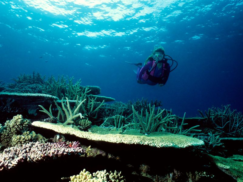 fiji coral garden with diver istk