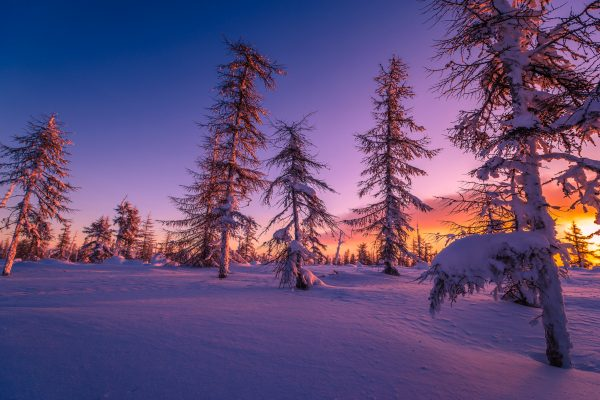 Experience a winter sunset over the taiga forest on a Finland holiday