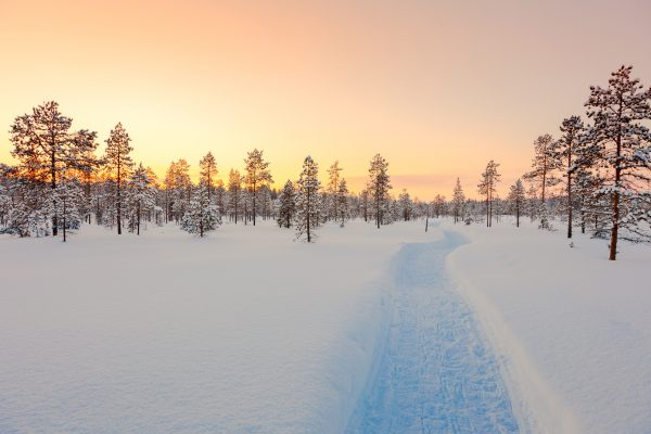 finland lapland sunset taiga forest istk