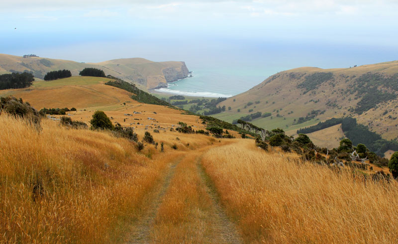new zealand akaroa and banks peninsula tour1