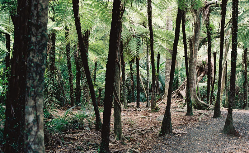 new zealand auckland best of both worlds forest trees