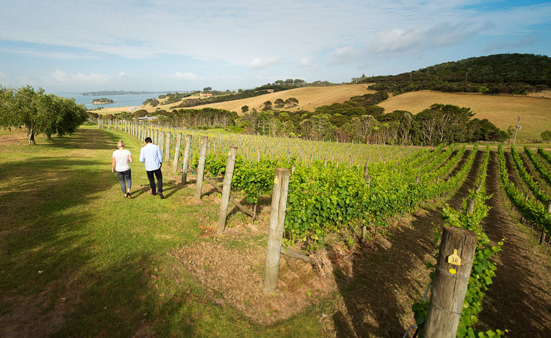new zealand auckland waiheke island vineyard tnz