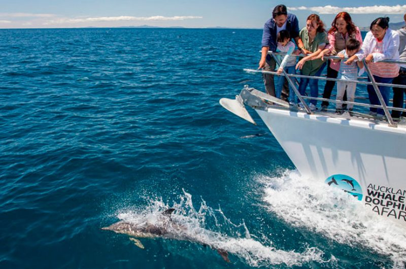 new zealand auckland whale and dolphin eco safari family