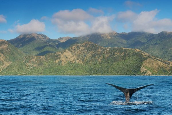 new zealand kaikoura sperm whale shore backdrop istk