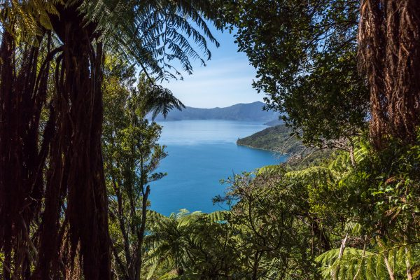new zealand marlborough view queen charlotte track istk 1