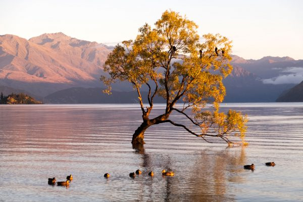 new zealand southern lakes wanaka ducks istk
