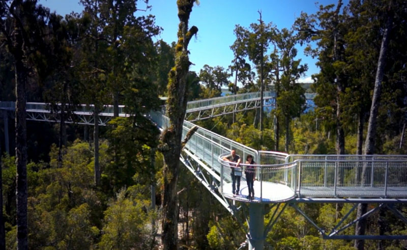 new zealand west coast treetop walk1