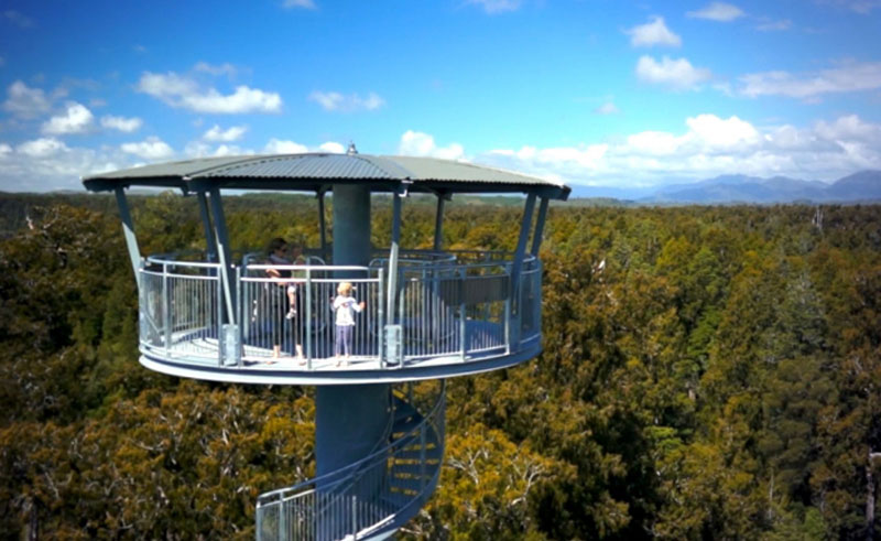 new zealand west coast treetop walk2