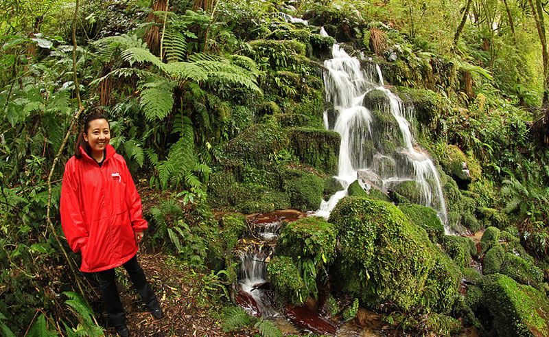 new zealand whirinaki forest guided walk