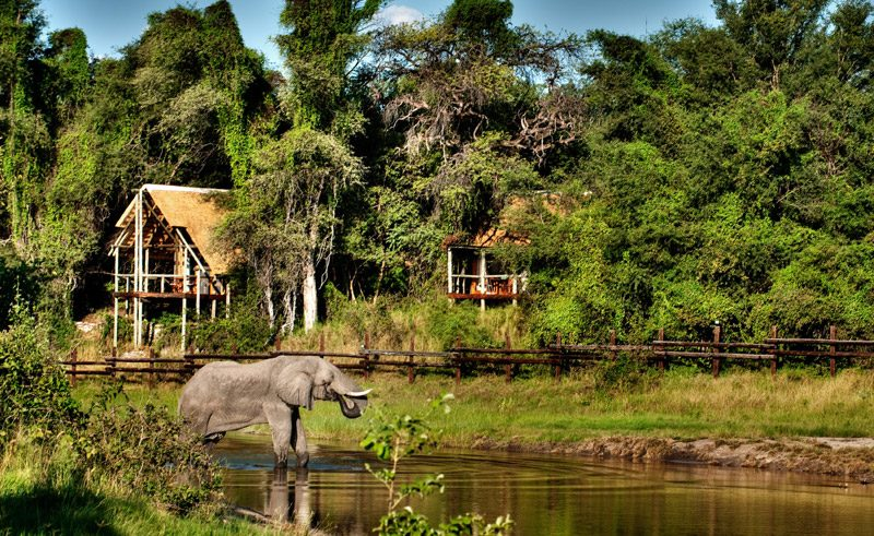 savute safari lodge waterhole