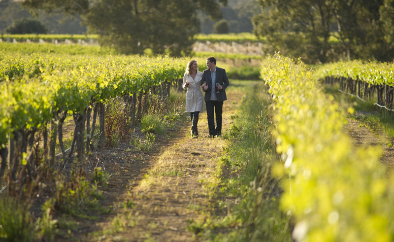 south australia barossa valley vineyard stroll satc