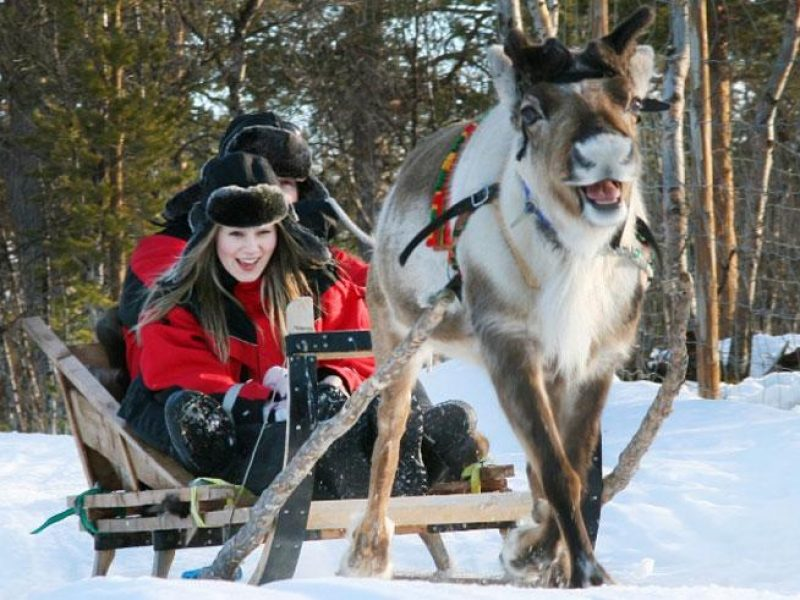 swedish lapland reindeer sledding ripan