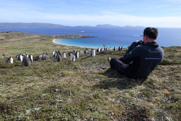 antarctica falkland islands carcass island watching penguins gt