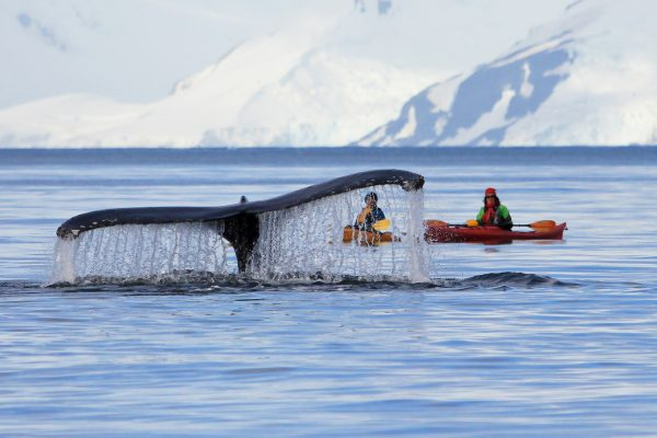 antartica peninsula kayaks with humpback adstk