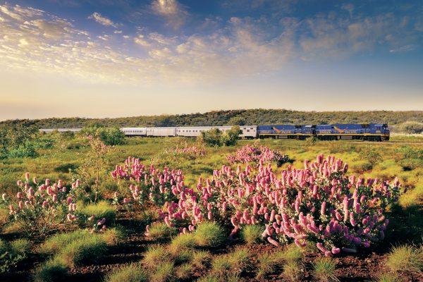 australia indian pacific train journey flora