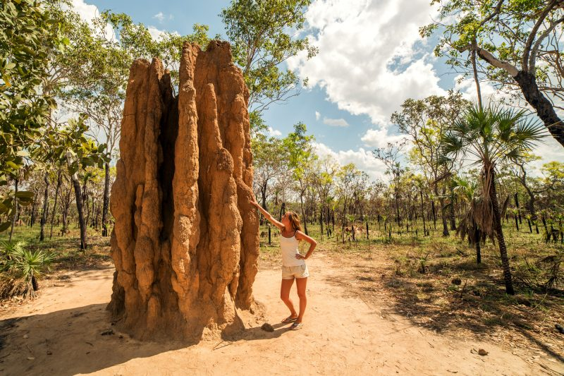 australia northern territory litchfield national park termite mound istk