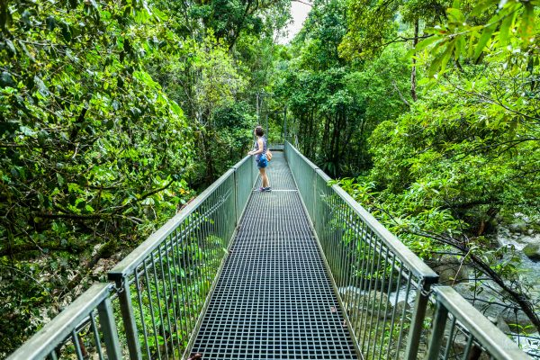 australia queensland bridge in Daintree Rainforest istk