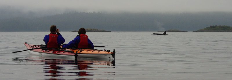 canada bc kayaking with orca