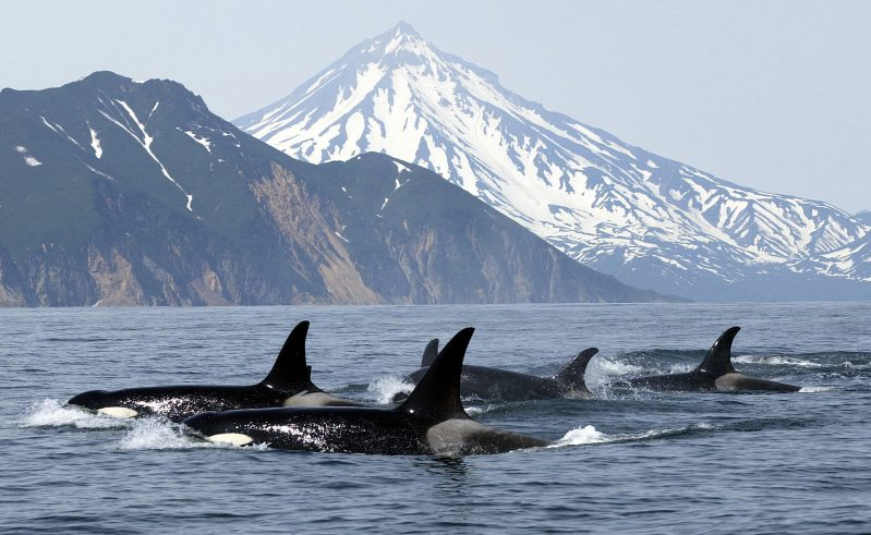 canada british columbia vancouver island orca istk