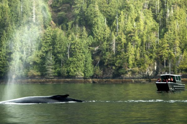 canada british columbia whale watching at ocean hse haida gwaii