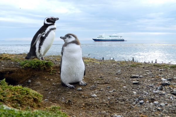 chile patagonia magdalena island ship penguins aust