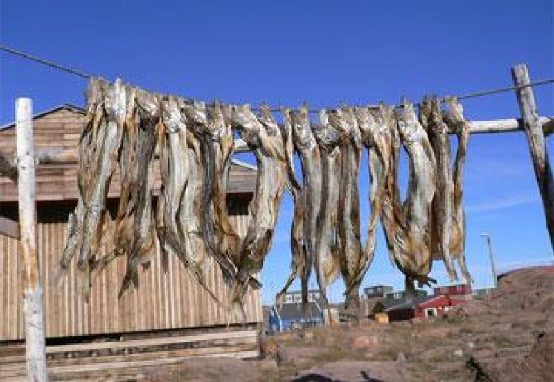 greenland dried fish salikhard