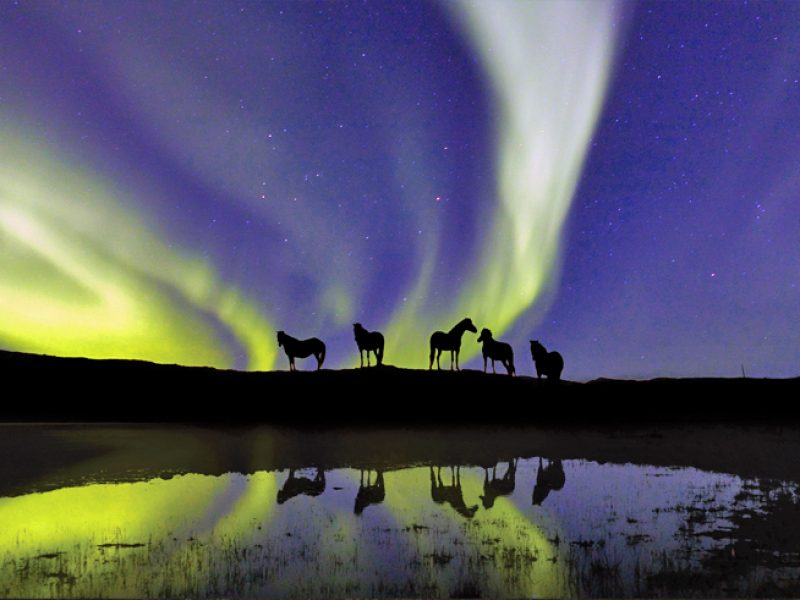 icelandic horses northern lights