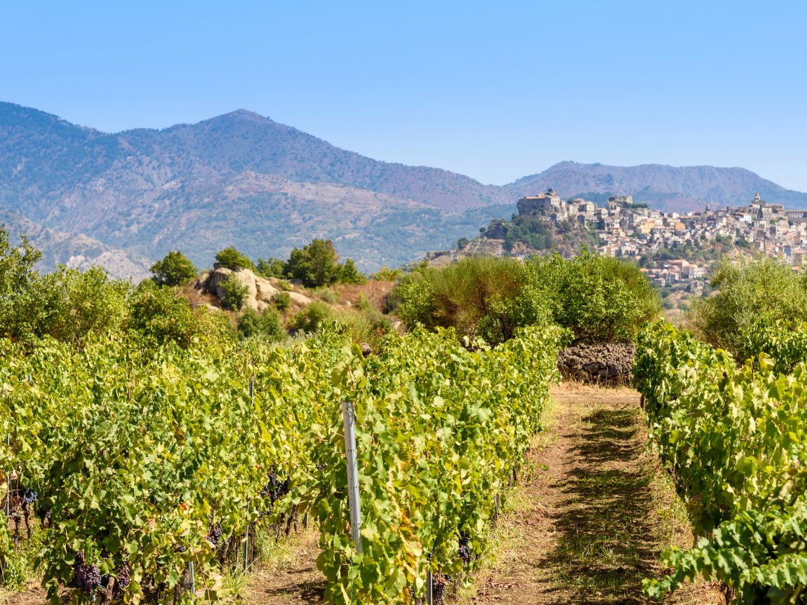 italy sicily vineyard on mt etna istk