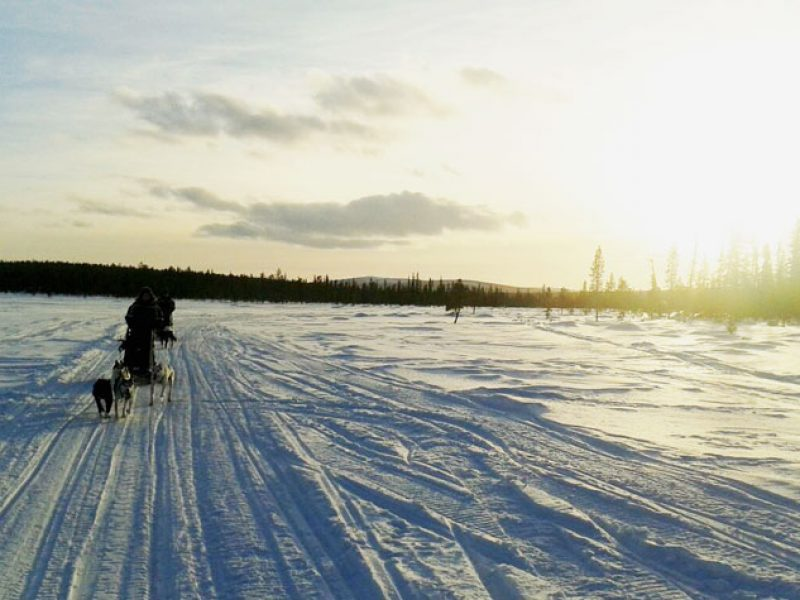 lapland Sledging in the Sun