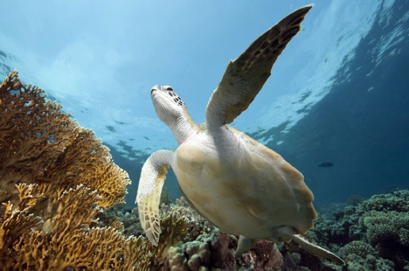 morocco sea turtle stock