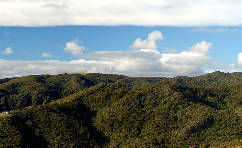 new zealand auckland waitakere ranges