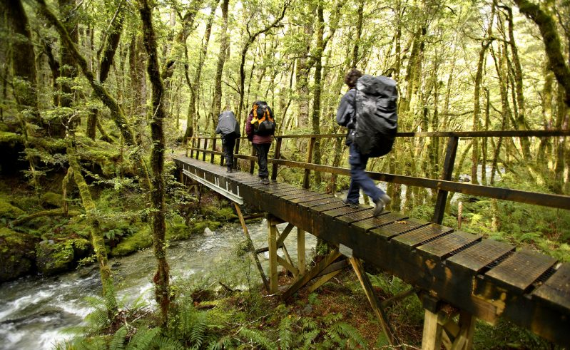 new zealand fiordland kepler track hiking over footbridge df