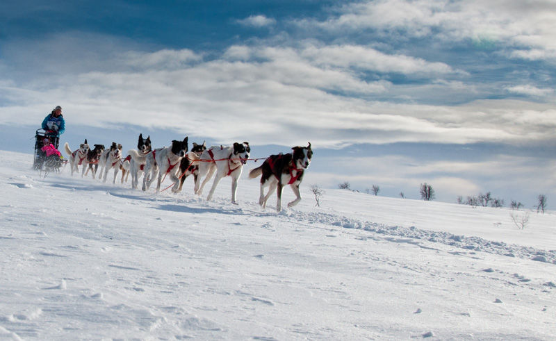 northern norway alta dog sledding