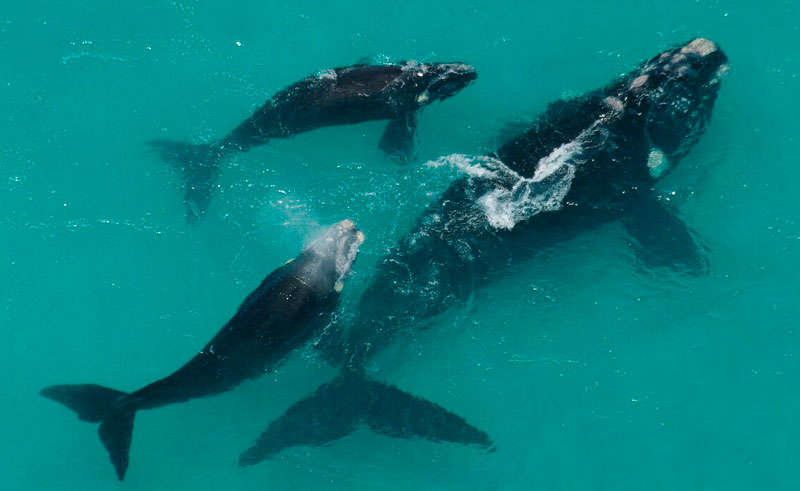 south africa hermanus whale watch aerial view sa wings