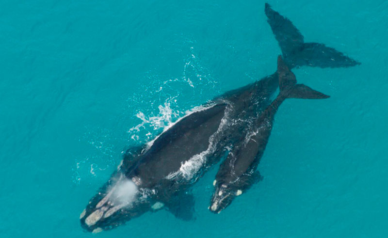 south africa hermanus whale watch aerial view sa wings2