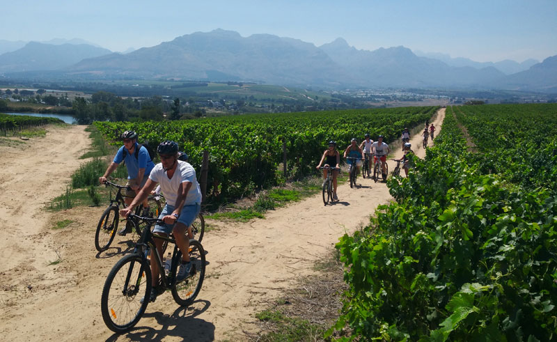 south africa winelands cycling bikes and wines