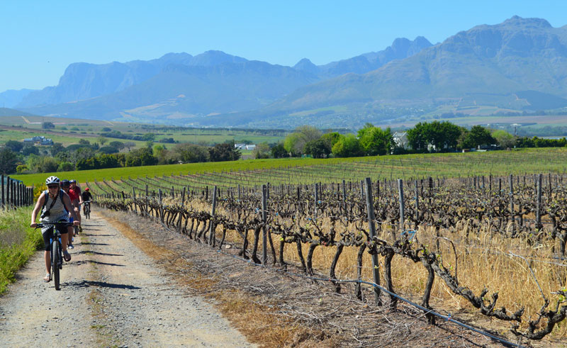 south africa winelands cycling view bikes and wines