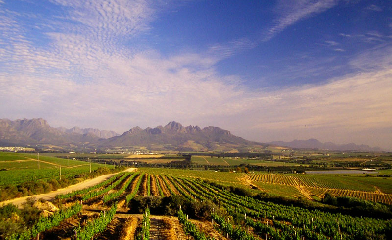 south africa winelands vine hopper tour3