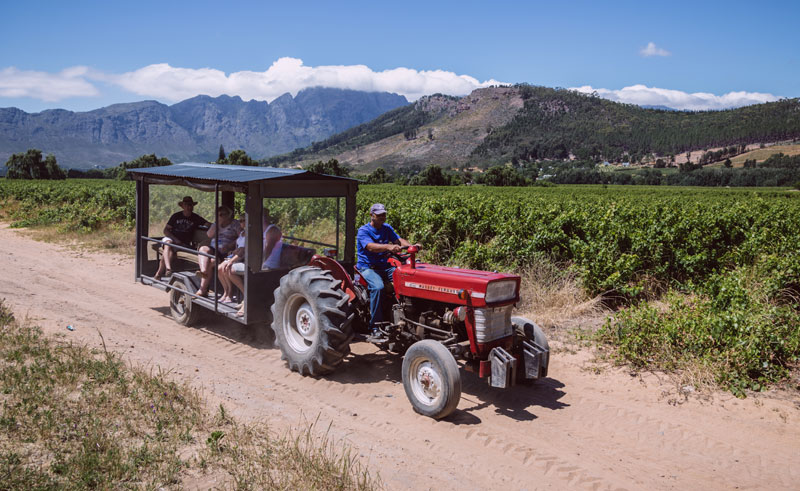 south africa winelands wine tour tractor