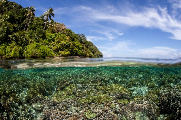 papua new guinea coral reef and equatorial island istk