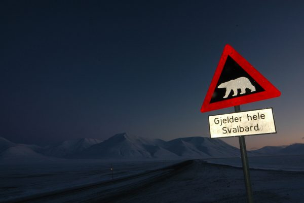 svalbard polar bear sign at night