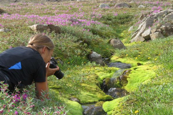 east greenland tasiilaq photographing flowers ch