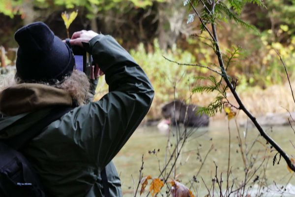 canada british columbia photographing a grizzly bear ecot